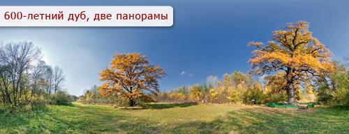 3d панорама старый дуб в Святогорске